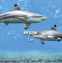 акулы.png